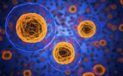 Le Renouvellement Cellulaire
